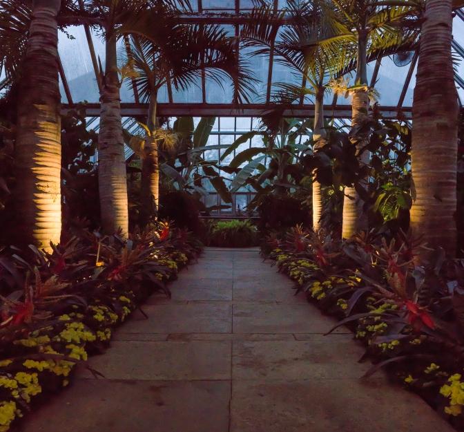 Ground Lit Palm Trees at the Chicago Botanic Garden