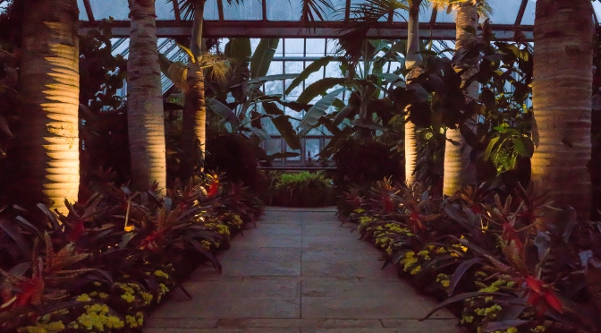 Ground Lit Palm Trees at the Chicago Botanic Garden